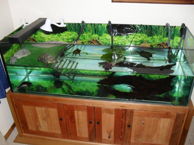 Ideal Tank Setup Turtlerescue